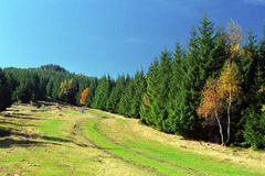 Green, blue and a litlle yellow. Usually colors of autumn Royalty Free Stock Photo