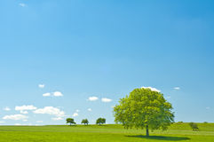 Green with blue sky and clouds Stock Images