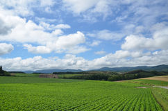 Green and Blue. Blue sky and clouds at Bie field ,Hokkaido ,Japan Stock Photo