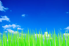 Green and blue sky Stock Photos
