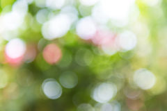 Green and blue summer bokeh for background Stock Images