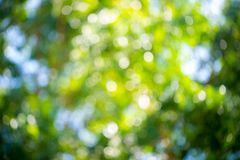 Green and blue summer bokeh for background . natural green blur style from trees. Abstract background,Blurred of green trees lawn. Light nature in park and stock photos