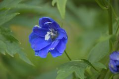 Blue flower on a green background royalty free stock images