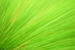 Green blur background Royalty Free Stock Photo