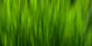 Green blur background Stock Photo