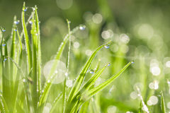 Green blur background from a grass on a field Stock Photography