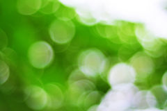 Green Stock Photography
