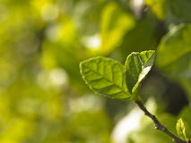 Green in blur Stock Photography