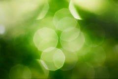Green blur soft Royalty Free Stock Image