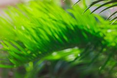 Green blured concept. summer in tropical climate. stock photos