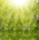 Green blurred background Royalty Free Stock Photo