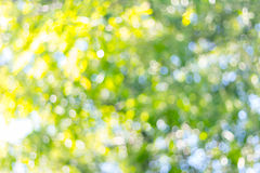 Green blurred background. Green bokeh blurred abstract light background Royalty Free Stock Image