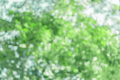 Green blurred background. Green bokeh blurred abstract light background Stock Image