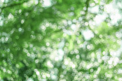 Green blurred background. Green bokeh blurred abstract light background Stock Photo