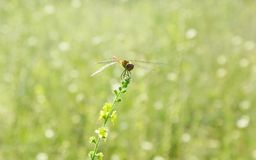 Green blurred background with dragonfly at flower Stock Image