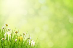 Green blurred background with grass, daisy flowers and Easter eg. Gs in a corner Royalty Free Stock Images