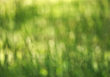 Green blurred background of nature summer glade of grass Royalty Free Stock Photo
