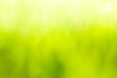 Green blurred background and sunlight.  Royalty Free Stock Photos