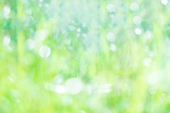 Green blurred bokeh background stock photo
