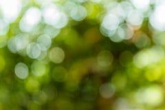 Green blurred bokeh in the garden background. Stock Photos