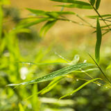 Green blurred close up plants landscape Royalty Free Stock Photos