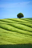 Green and bluse - landscape Stock Photography