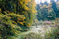 Bog beneath autum trees. Green bog beneath autumn trees, bushes, and pines Stock Photo