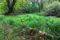 Green bog inforest Royalty Free Stock Photos