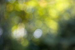 Green bokeh 2 Stock Images