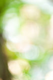 Green bokeh abstract. In thailand Royalty Free Stock Photos