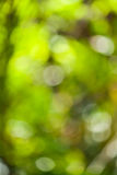 Green bokeh abstract. In thailand Stock Photos