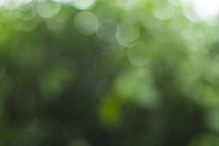 Green bokeh background. And abstract background stock photos