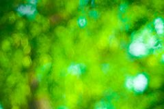 Green Bokeh background,Abstract backgrounds. Nobody, blurred. Summer Stock Photography