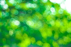 Green Bokeh background,Abstract backgrounds. Nobody, blurred. Summer Royalty Free Stock Images