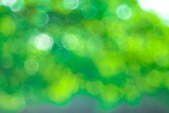 Green Bokeh background,Abstract backgrounds. Nobody, blurred. Summer Stock Photo