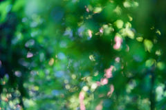 Green bokeh background with abstract blurred foliage and bright summer sunlight Royalty Free Stock Photo