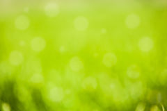 Green bokeh background Stock Photo