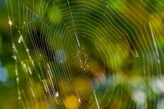 Green bokeh background with close up spider web. Royalty Free Stock Image