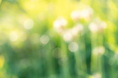 Green bokeh background of green grass. Nature background for organic product stock photos