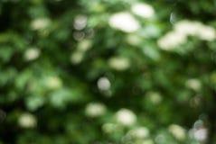 Green Bokeh Background, Green Trees Bokeh, Abstract Summer spring Sunny Texture. Green Bokeh Background, Green Trees Bokeh, Abstract Summer spring Stock Photo