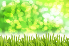 Green bokeh Background and Leaf on side. Stock Images