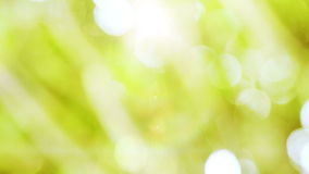 Green bokeh background stock video