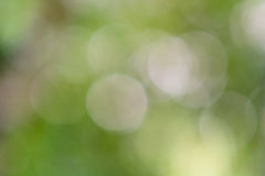 Green bokeh of blur leaves Royalty Free Stock Photo