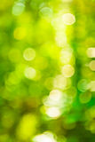 Green bokeh of blurred foliage Royalty Free Stock Photography