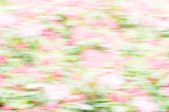 Green bokeh from flowers Royalty Free Stock Image