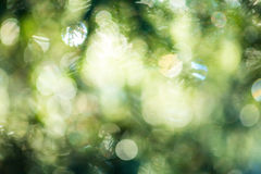 Green bokeh light background Stock Photography