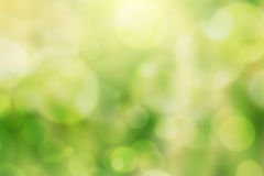 Green bokeh Natural background Stock Images