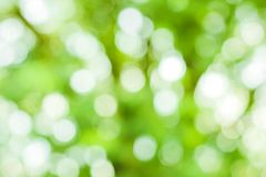 Green bokeh on nature defocus art. Abstract blur background Stock Photos