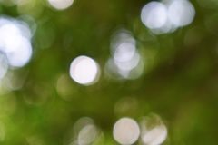 Green bokeh out of focus background from nature forest. Background green blur beautiful is the bokeh effect nature color look attractive stock photo