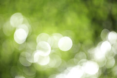 Green bokeh from plant. In nature Stock Image